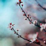Eheytyminen Henkinen kasvu ja kukoistus Elämänmuutos ohjeet Kuudes Aisti Auttajat